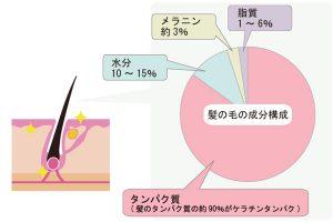 髪の毛を構成している成分を図化して説明した画像