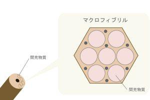 間充物質を図化して説明した画像